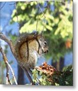 Squirrels Spring Meal Metal Print