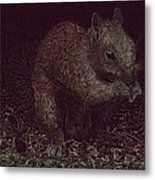 Squirrely Art Metal Print