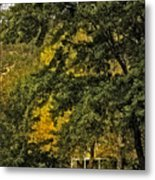 Seeing The Beauty In The Trees Metal Print