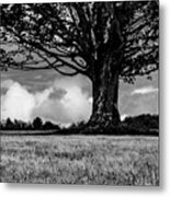 St. Benedict Abbey Single Tree In Summer Metal Print