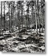 St Lawrence's Wood, Hartshill Hayes Metal Print