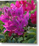St Lucia Floral Metal Print