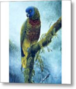 St. Lucia Parrot - Majestic Metal Print