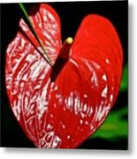 A Point To Your Heart Metal Print
