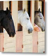 Stable Series  Metal Print