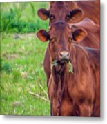 Stacked Up Cows          Metal Print