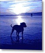 Staffordshire Bull Terrier On Beach Metal Print by Michael Tompsett