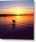 Staffordshire Bull Terrier On Lake Metal Print by Michael Tompsett