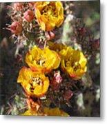Staghorn Cholla Blossoms Metal Print