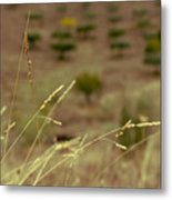 Stalks Blown By The Wind Metal Print