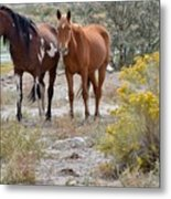 Stallion And Mare Metal Print