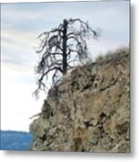 Stalwart Pine Tree Metal Print