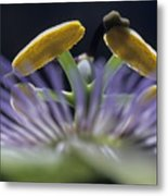 Stamen Of A Passionflower Metal Print