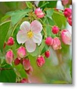 Stand Alone Japanese Cherry Blossom Metal Print