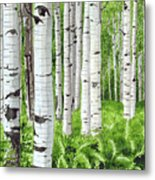 Stand Of Birch Metal Print