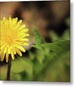 Stand Out - Dandelion Metal Print