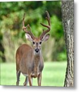 Stand Your Ground Metal Print