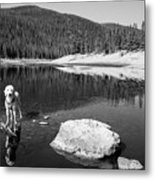 Standing In Comanche Reservoir Metal Print