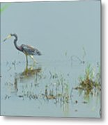 Standing In The Marshes Metal Print