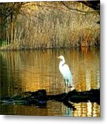 Standing On Shakey Ground Metal Print