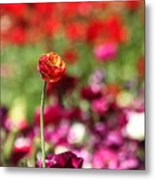 Standing Out Above The Crowd Metal Print