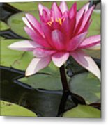 Standing Tall In The Pond Metal Print