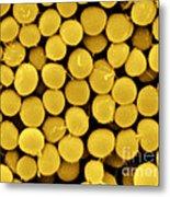 Staphylococcus Capitis Bacteria, Sem Metal Print