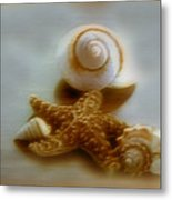 Star And Shells Metal Print
