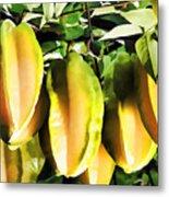 Star Apple Fruit On Tree Metal Print