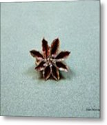 Star Flower Metal Print