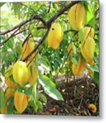 Star Fruit Belongs To The Plant Family Metal Print