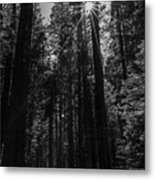 Star In The Forrest Metal Print