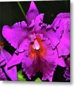 Star Of Bethlehem Orchid 006 Metal Print