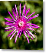Starburst Of The Wildflowers Metal Print