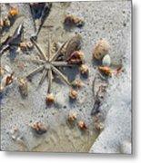 Starfish And Sea Shells Metal Print