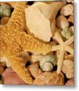 Starfish And Seashells Metal Print