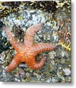 Starfish Running Metal Print