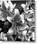 Stargazer Lilies Bw Metal Print