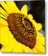 Staring At The Sun 2 Metal Print