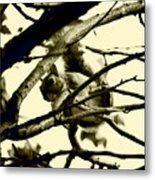 Staring Squirrel Metal Print