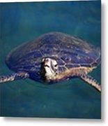 Staring Turtle Metal Print