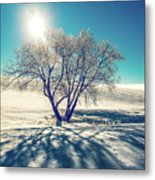 Stark Shadows Metal Print