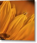 Starry Sunflower Metal Print