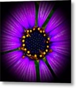 Stars In The Daisy Metal Print