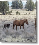 Staying Close To Mama Metal Print