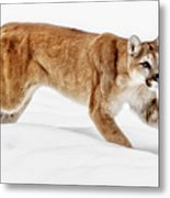 Stealth In The Snow Metal Print