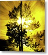 Steam And Tree With Sunlight Rays Blue Sky Metal Print