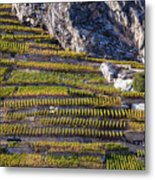 Steep Slope Viticulture In Valais Canton Metal Print