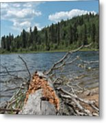 Steepbanks Lake The Fallen Metal Print