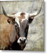 Steer Bull Metal Print